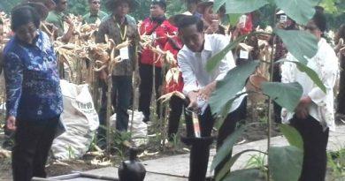 presiden jokowi di tuban