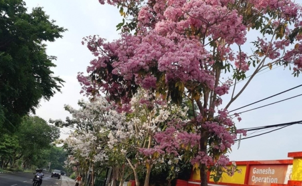 bunga surabaya