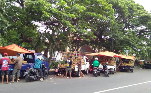 durian sda 1