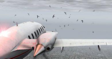burung di bandara x plane
