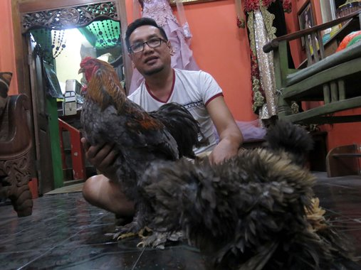 ayam hias 1