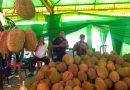 """Penggemar Durian """"Serbu"""" Bursa Durian di Sidoarjo"""