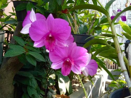 bunga n bidan 1