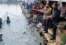 Panen Raya dan Tebar Benih di Tambak Kalanganyar, TNI-Polri Sinergitas Wujudkan Ketahanan Pangan