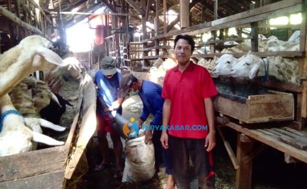 pedagang kambing h afif
