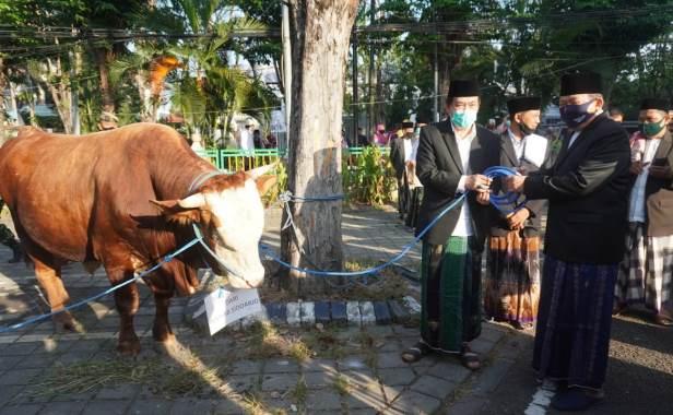 sapi wabup u masjid agung