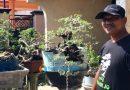 Segini Penghasilan Petani Bonsai Sidoarjo