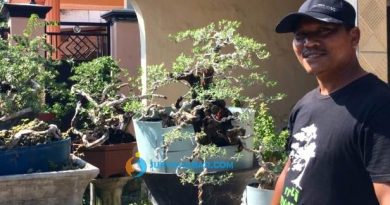 bonsai khoirul